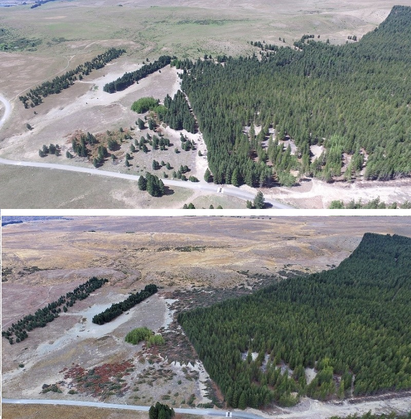 Godley Mt Hay Station Before and After